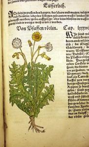 Trešais izdevums (1551). Ar rokām kolorētie attēli ir izgatavoti gandrīz ar fotogrāfisku precizitāti
