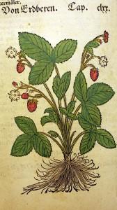 Trešais izdevums (1551)