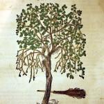 Slotas arī mūsdienās, tāpat kā pirms piecsimt gadiem, izgatavo no bērza zariem