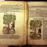 Trešā (1551) un ceturtā (1565) izdevuma salīdzinājums. Abos izdevumos izmantotas vienas attēlu klišejas, taču teksta salikums atšķiras