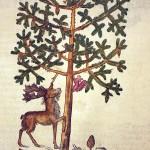 Koka sakņu labā pusē mākslinieks atstājis savu monogrammu - D. K. - Dāvids Kendels